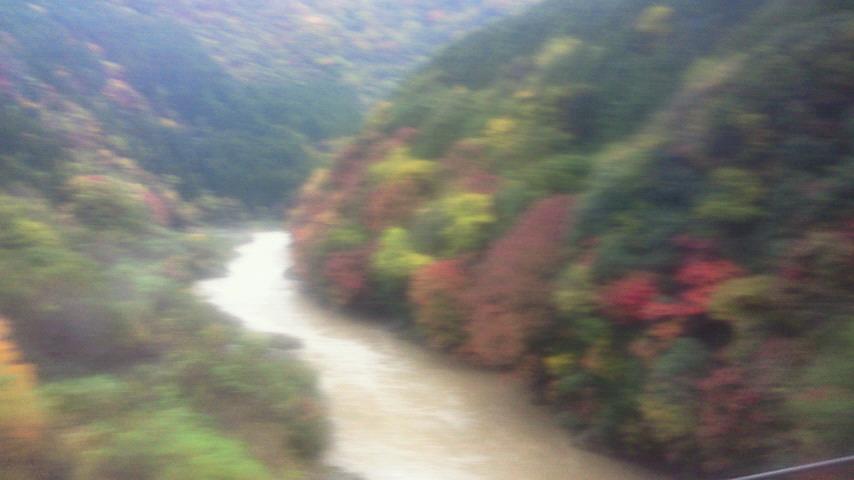 保津峡の紅葉が見頃を迎えつつあります