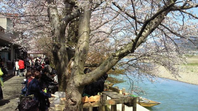 快晴!桜!五人水!